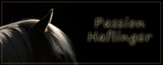 Passion Haflinger